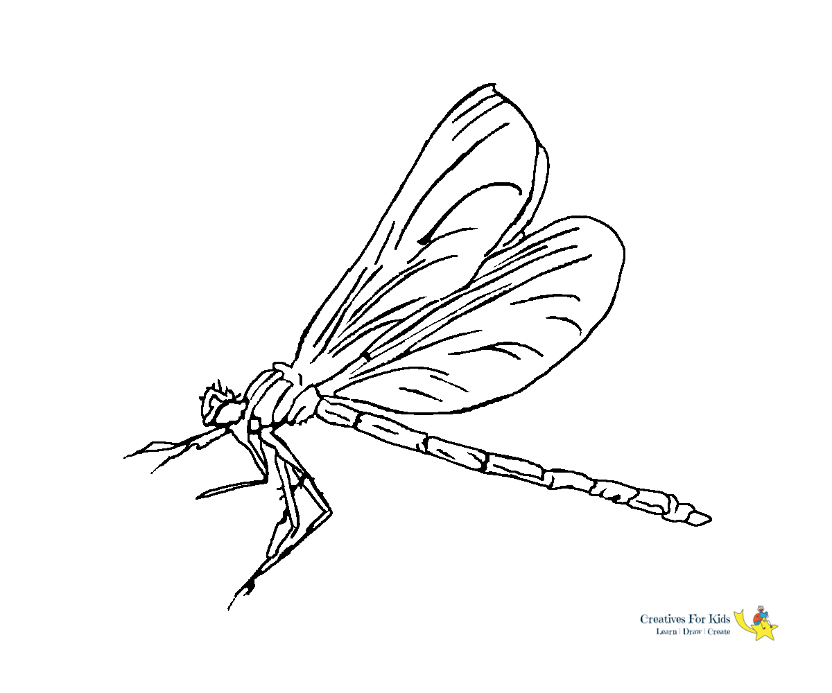 Printable Dragonfly Coloring Pages | ColoringMe.com | 1000x1200