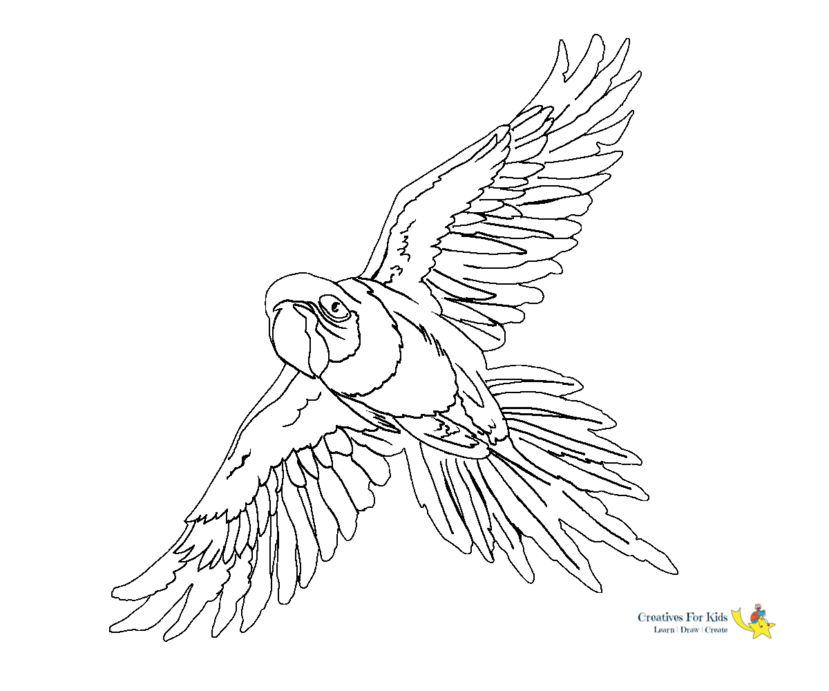 Parrot Coloring Pages - Kiddo