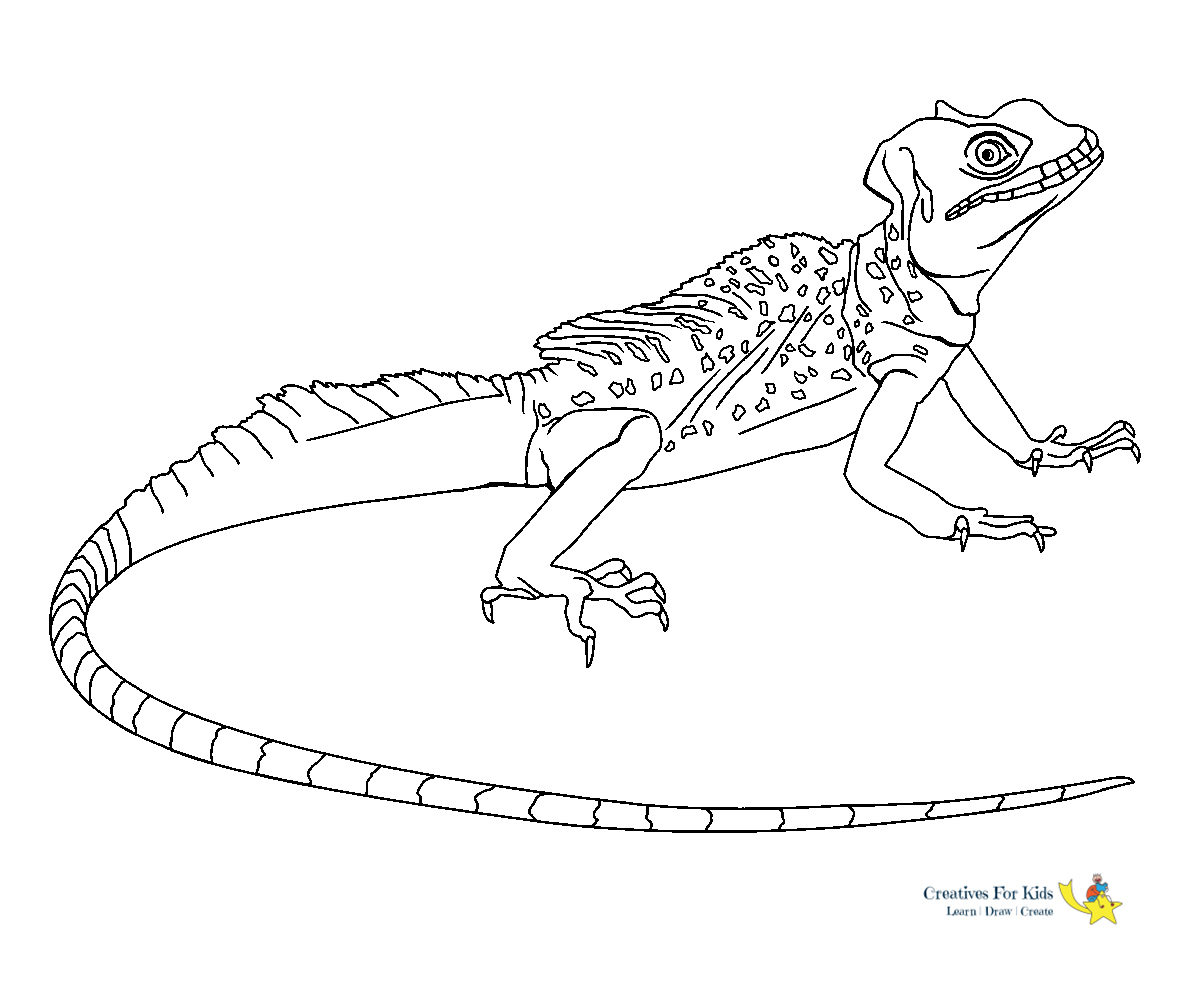 Printable Lizard Coloring Pages For Kids | 1000x1200