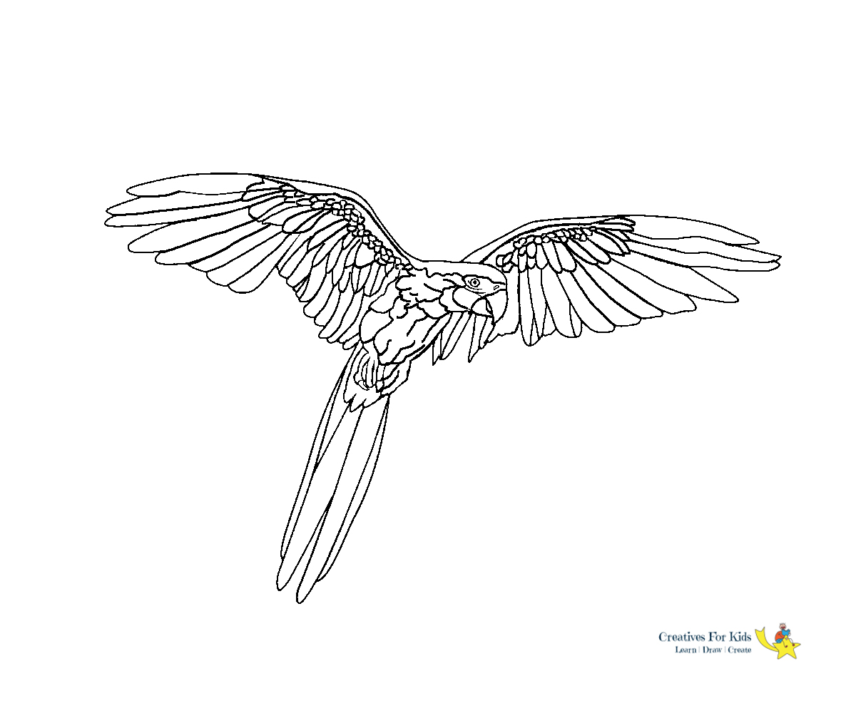 Parrot Coloring Page. Scarlet Macaw Royalty Free Cliparts, Vectors ...   1000x1200