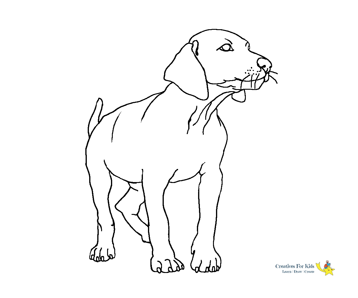Printable Shih Tzu Dog coloring page for both aldults and kids.   1000x1200