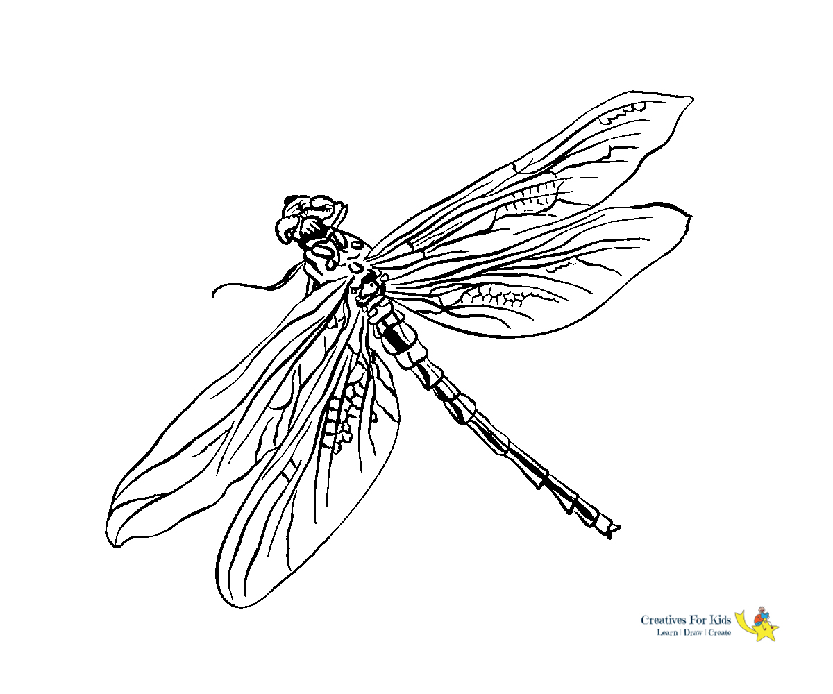 Dragonfly Coloring Page - Coloring Home | 1000x1200
