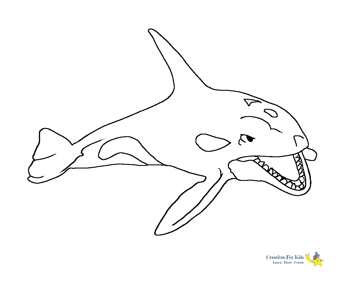 Whale Coloring Pages   Kiddo