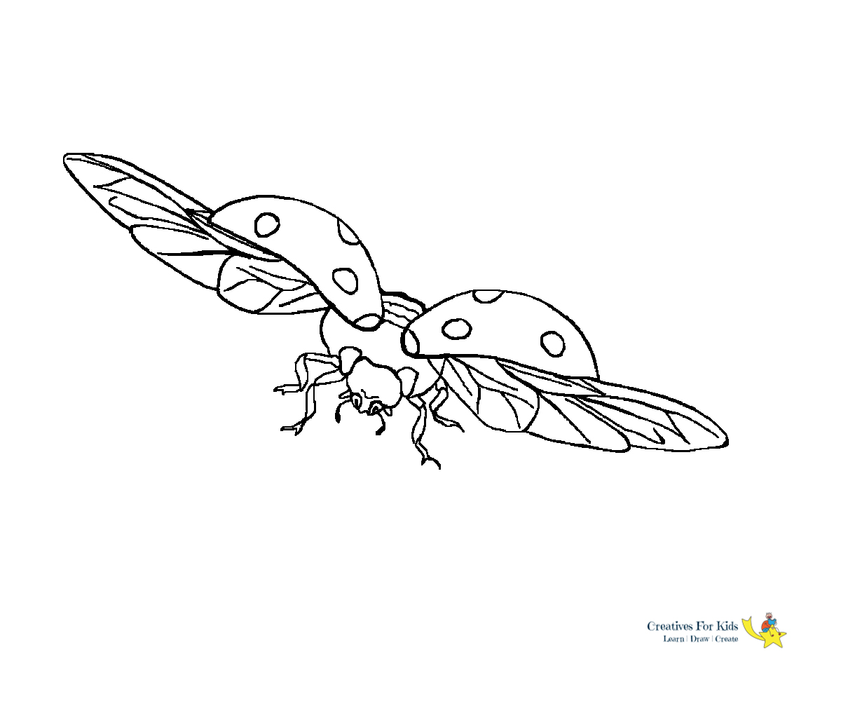 Bug Coloring Pages - Kiddo